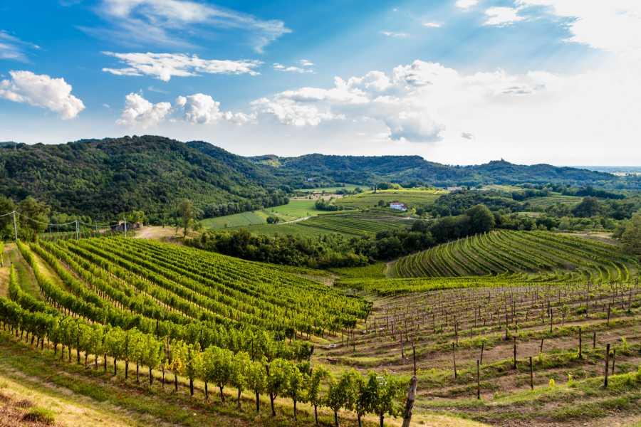 ToDoInSlovenia, brand of Kompas d.d. Premium Tour - Grape Harvest