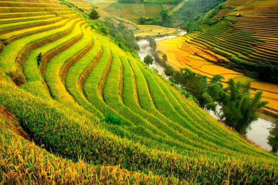 Vietnam 24h Tour Tour du lịch Hà Nội - Mù Cang Chải mùa lúa chín