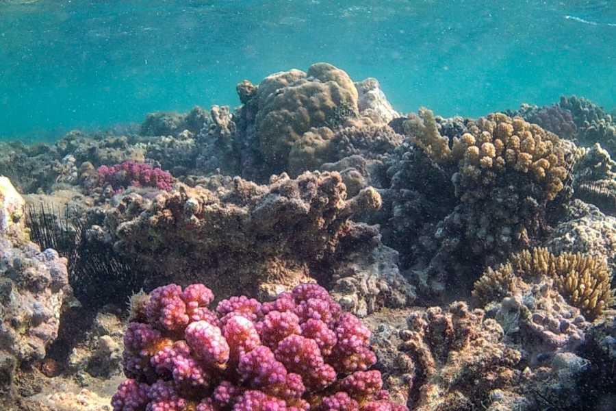 Marsa alam tours Snorkeling trip to orange bay from Safaga Port