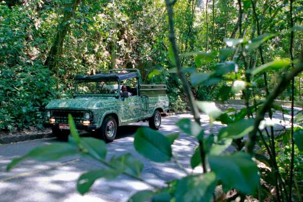 4hr Tijuca National Forest Jeep Tour