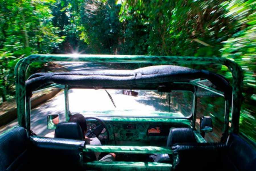 TourRJ.com 4hr Tijuca National Forest Jeep Tour