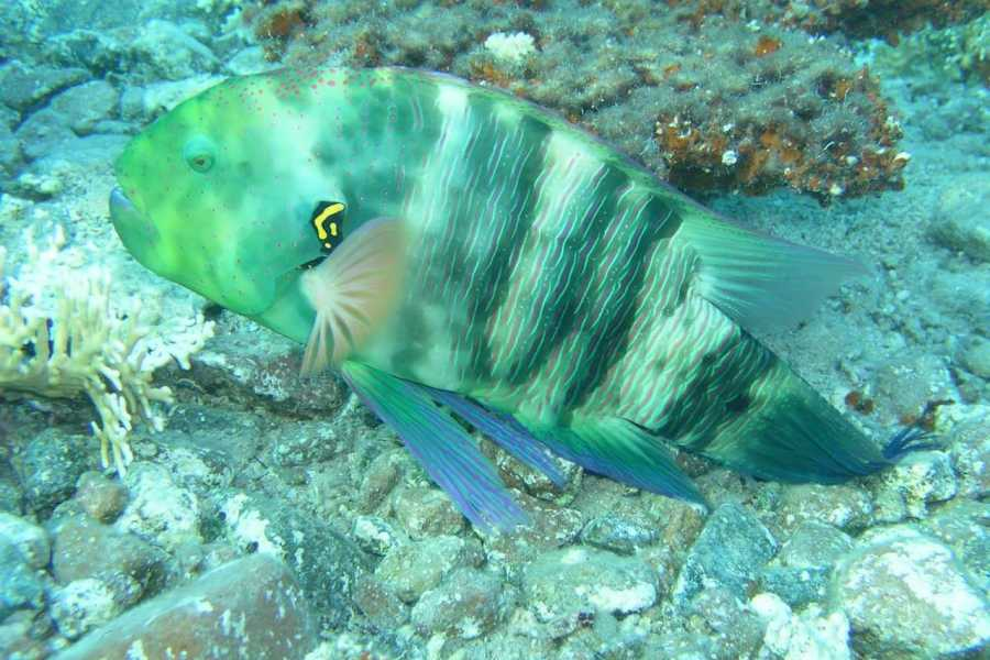 Excursies Egypte Tour sous-marin de Sindbad depuis El Gouna
