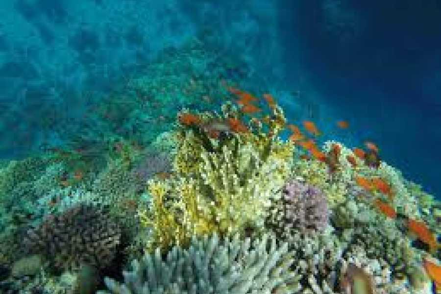 Excursies Egypte Semi Submarine Tour from El Gouna