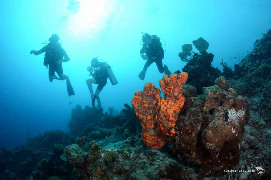 Blue Bay Dive & Watersports PADI Advanced Open Water Kurs