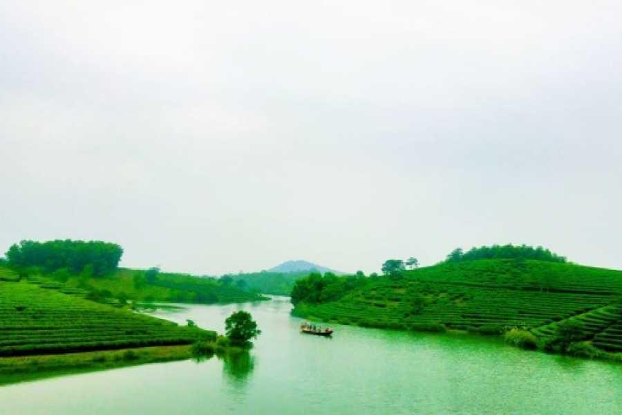 Vietnam 24h Tour Ốc đảo chè Nghệ An - VQG Pù Mát 3 ngày 2 đêm