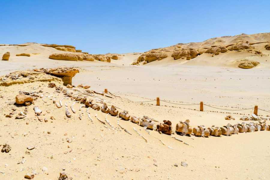 Excursies Egypte 3 days trip White desert and wadi el Hitan from Cairo