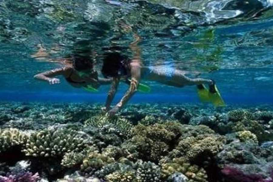 Excursies Egypte Plongée en apnée dans les îles Hamata au départ de Marsa Alam