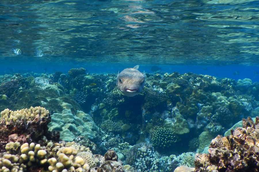Excursies Egypte Overnight snorkeling trip at Satayah dolphin reef Marsa Alam