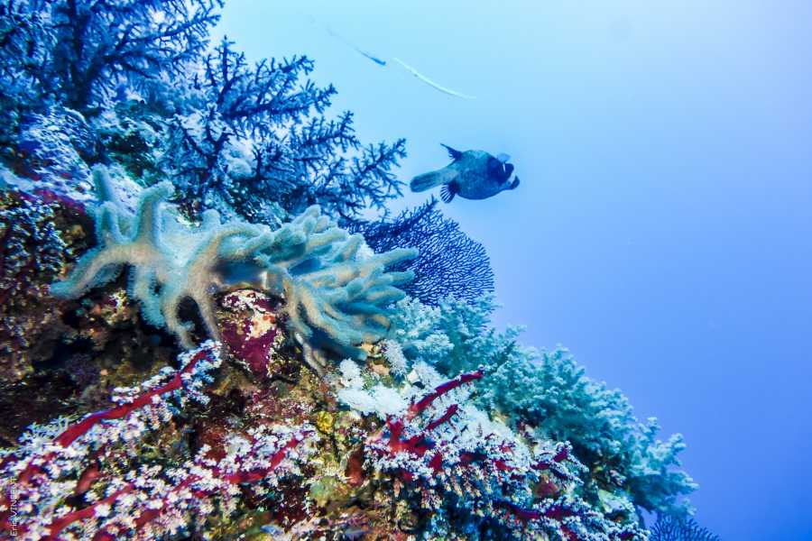 Excursies Egypte PORTGHALIB INTRO DIVING TRIP FROM MARSA ALAM