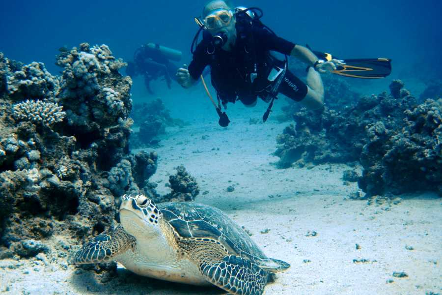Excursies Egypte Day diving trip to Hamata island from Marsa Alam