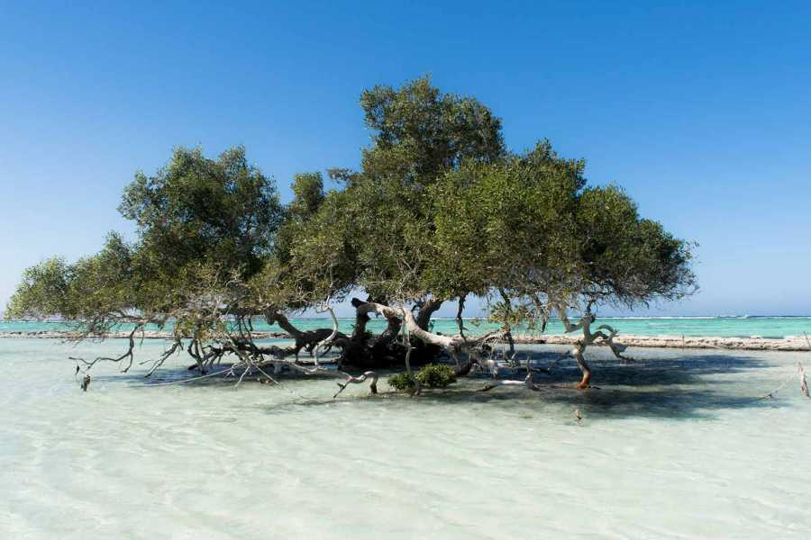Excursies Egypte Wadi El Gemaltours from Marsa Alam