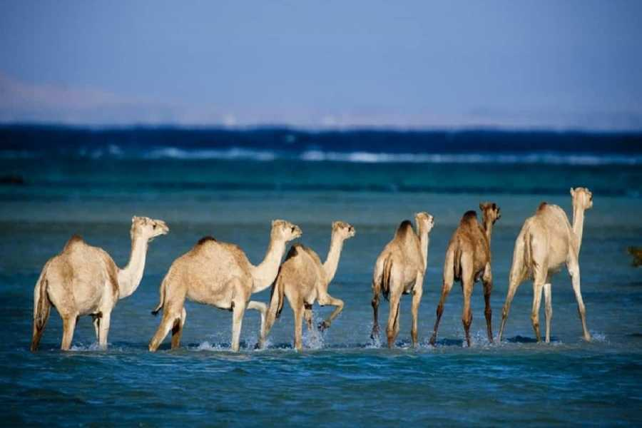 Excursies Egypte Wadi El Gemal tours from Marsa Alam