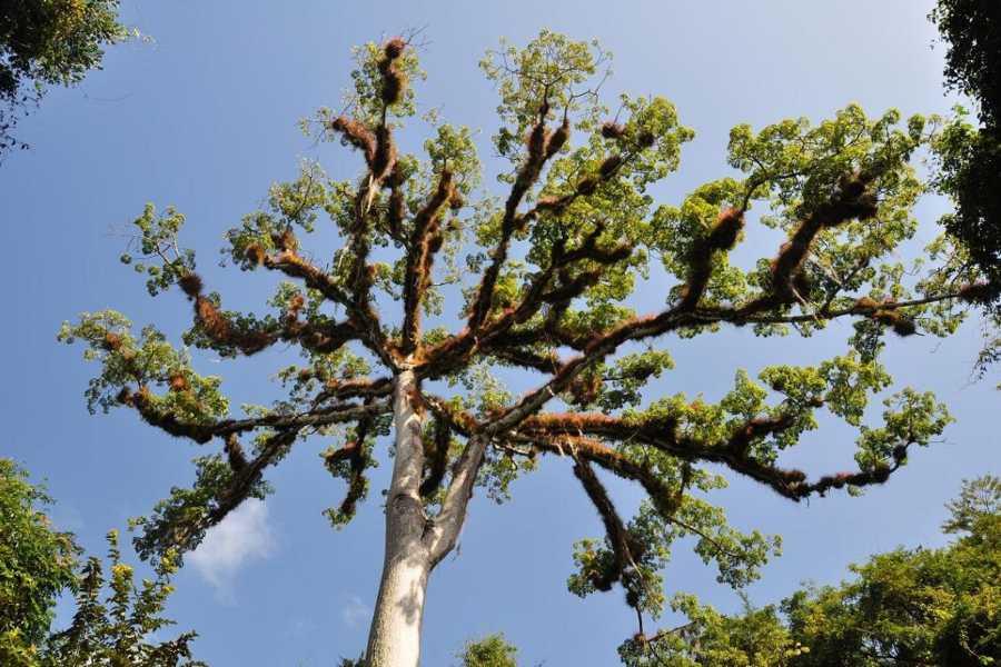 Gem Trips 03:15 Tikal Tour de Amanecer en grupo pequeño desde Los Amigos