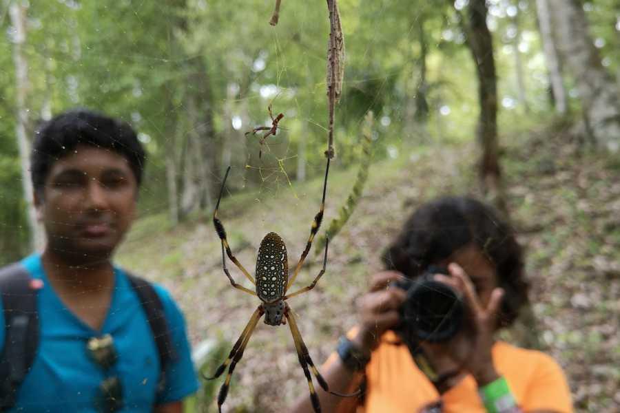 Gem Trips 10:50 Tikal Tour privado de Atardecer desde Las Lagunas