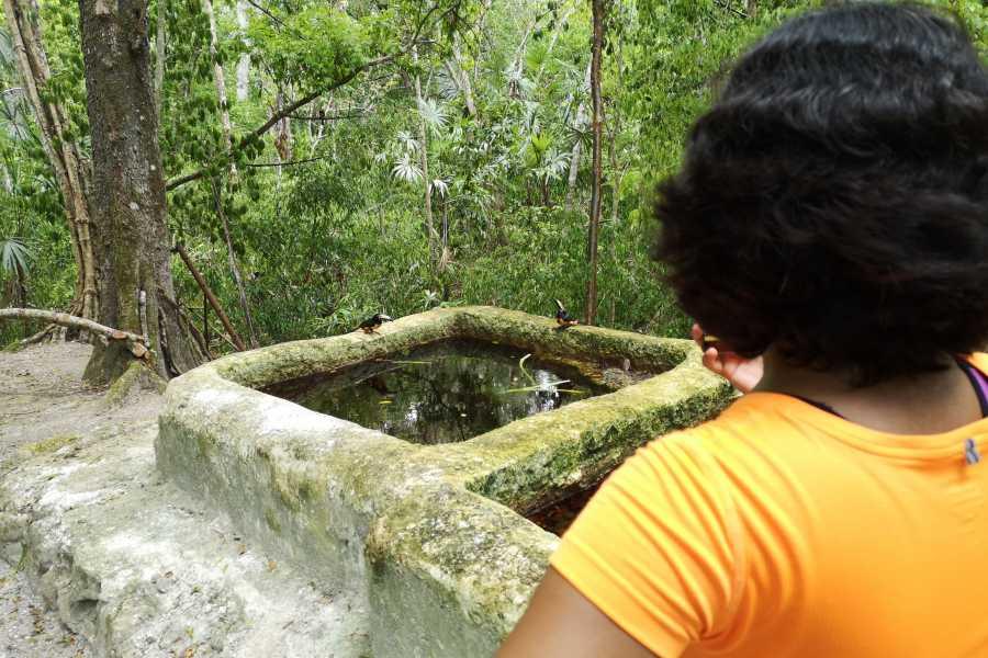 Gem Trips 11:00 Tikal Tour privado de Atardecer desde Camino Real Tikal