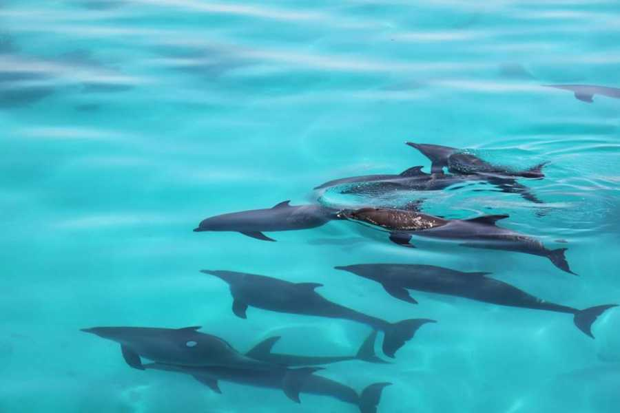 Excursies Egypte Snorkeling trip at Satayah dolphin Reef From PortGhalib