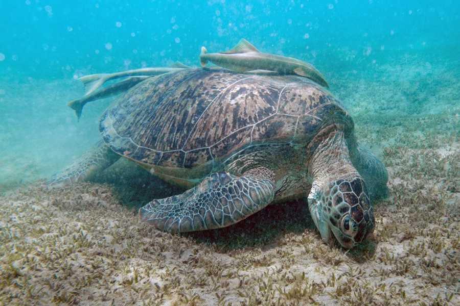Excursies Egypte Abu Dabbab Dugong Snorkeling Trip From Port Ghalib