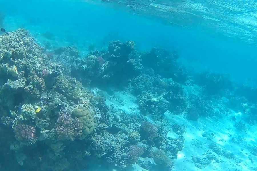 Excursies Egypte Sharm el Lulli and Wadi El Qulaan trip from Portghalib