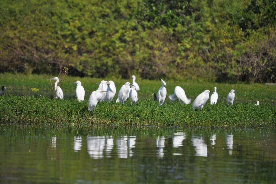 COSTA NATIVA ECOTOURS BIRD WATCHING RIVERSIDE AND JUNGLE TRAILS