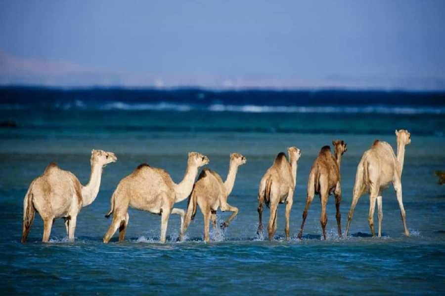 Excursies Egypte Wadi El Gemal Excursions In Port Ghalib