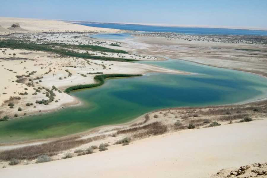 Marsa alam tours Day Trip to Wadi Al Hitan whales valley from Cairo