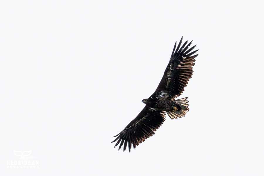 Hebridean Adventures Isle of Skye and Western Highlands Wildlife Explorer Cruise