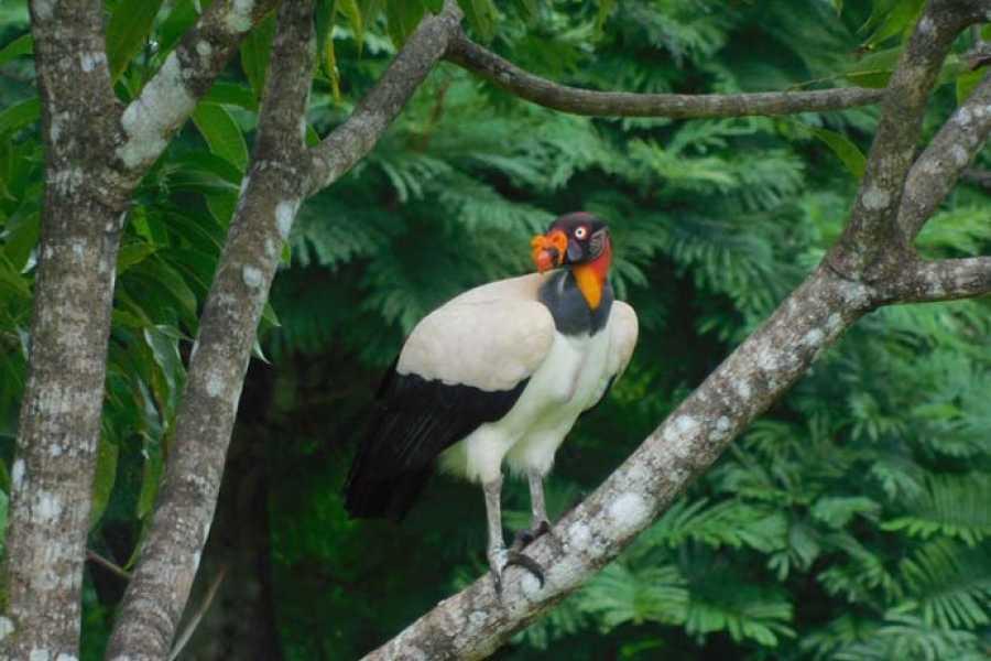 Uvita Information Center RAINFOREST BIRD WATCHING- Long Version