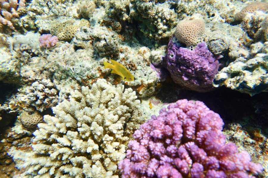 Marsa alam tours Sharm El Luli trip  from Marsa Alam