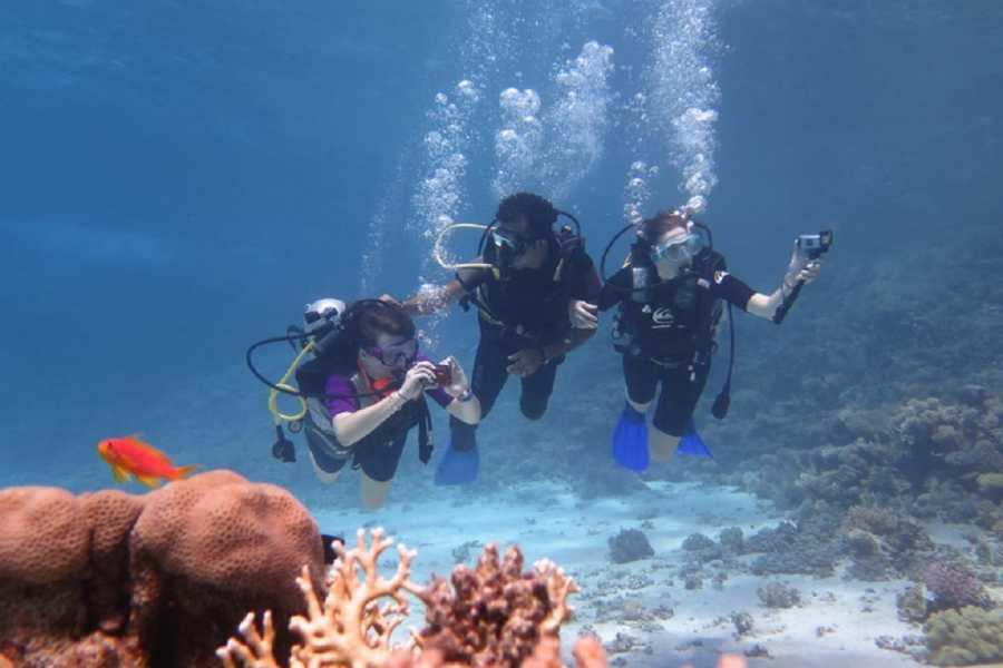 Marsa alam tours OVERNIGHT DIVING TRIP AT SATAYH DOLPHIN REEF PORTGHALIB