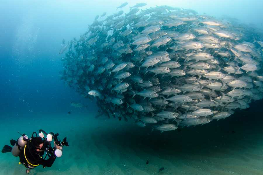 Marsa alam tours PADI SCUBA DIVING IN PORTGHALIB