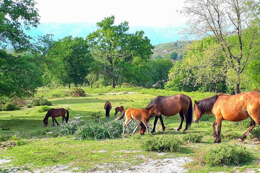 Gerês Holidays Tour Gerês Natureza @ saída de Braga