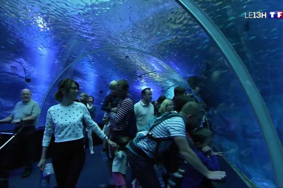 Excursies Egypte Grand Aquarium Entry Ticket and Tour in Hurghada