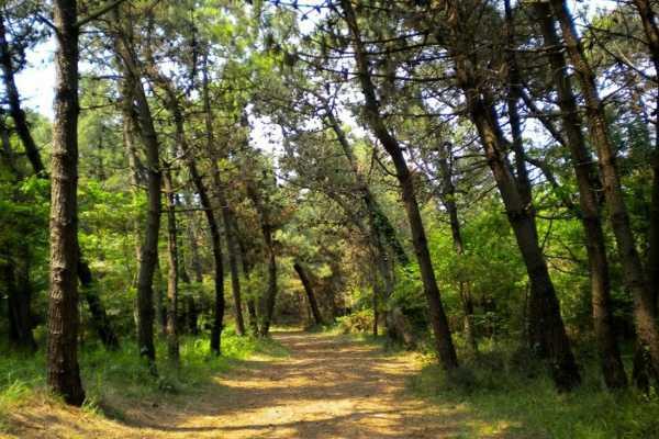 Natura in Romagna - Marina Romea