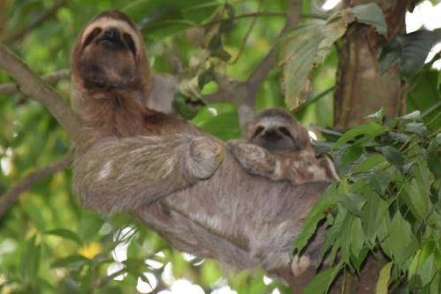 Tour Guanacaste Miravalles Volcano Plus Sloths