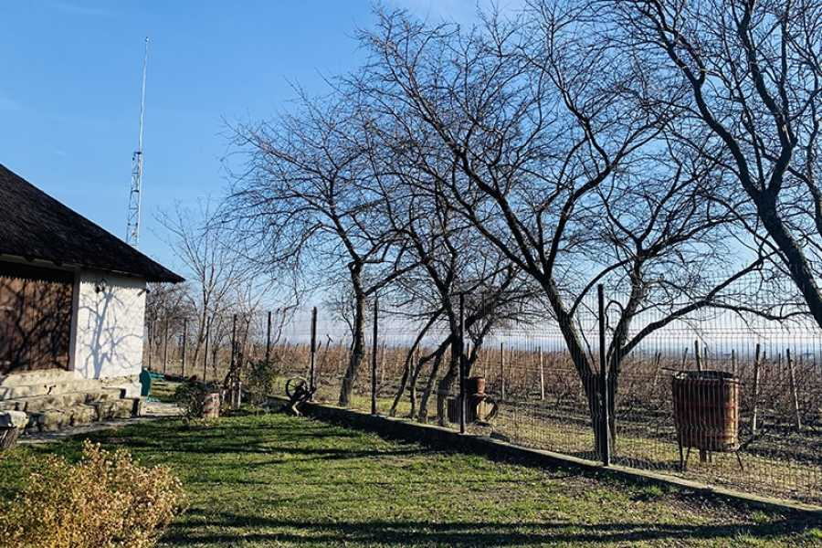 TravelMaker Wines of Wallachia – 8 hours