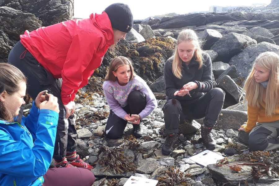 Runde Miljøsenter AS Seaweed safari & cooking 3 hrs