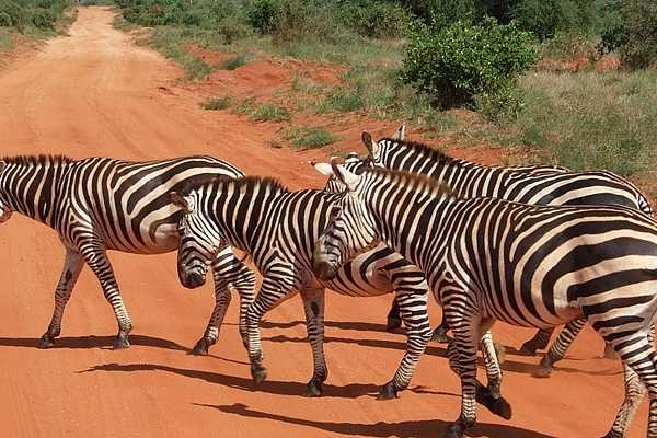 2 DAYS TSAVO EAST. ( MINIMUM 2 PAX)