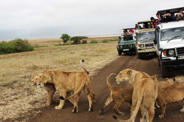 16 DAYS GREAT ADVENTURE KENYA – TANZANIA CLASSIC SAFARI