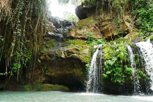 1 Day Ngare Ndare Forest From Nairobi (minimum 2 Pax)