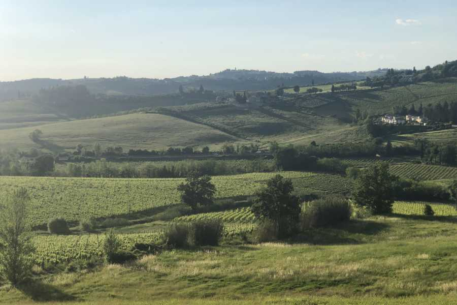 Italy on a Budget tours CHIANTI WINE TOUR - From San Gimignano