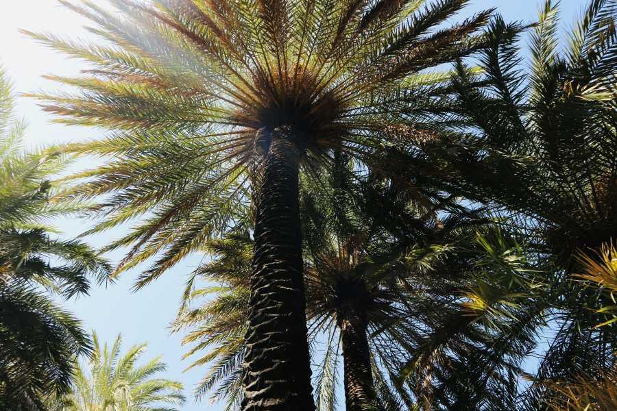Destination Platanias PREVELI BEACH - Palm Beach