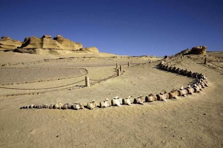 Excursies Egypte Wadi Al Hitan day trip  from Cairo