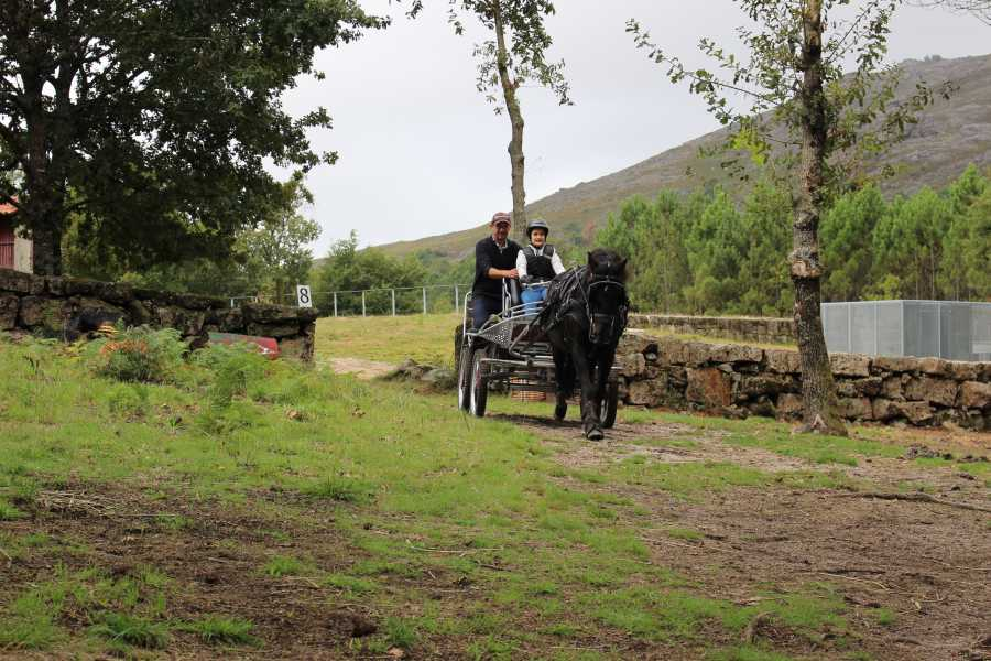 Gerês Equidesafios Draft horse training