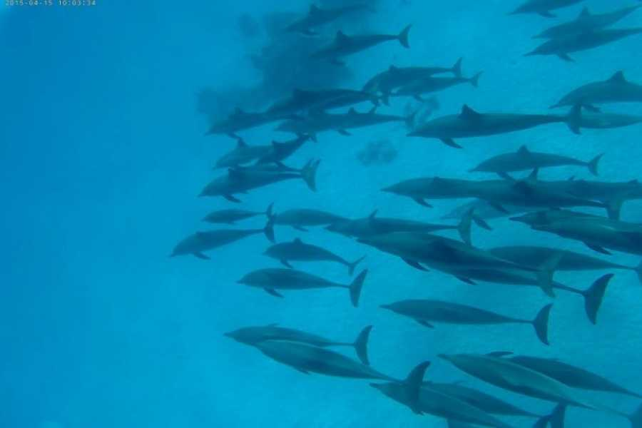 Marsa alam tours Diving trip to Satayh Dolphin Reef  from El Quseir