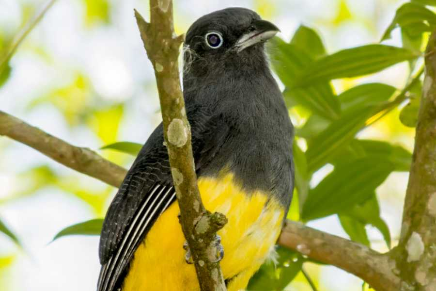 Around SP Bird watching