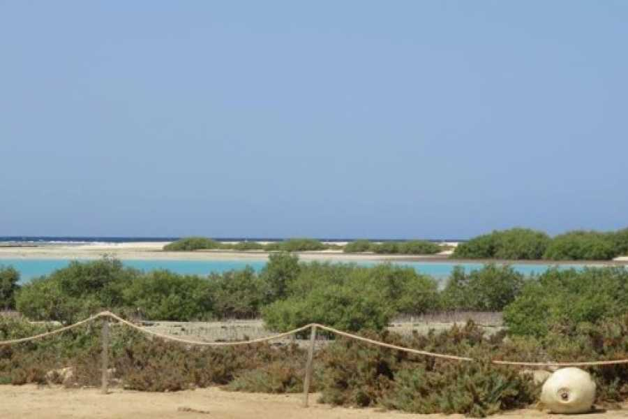Marsa alam tours Sharm El Luli Tours and The Qulaan El Quseir