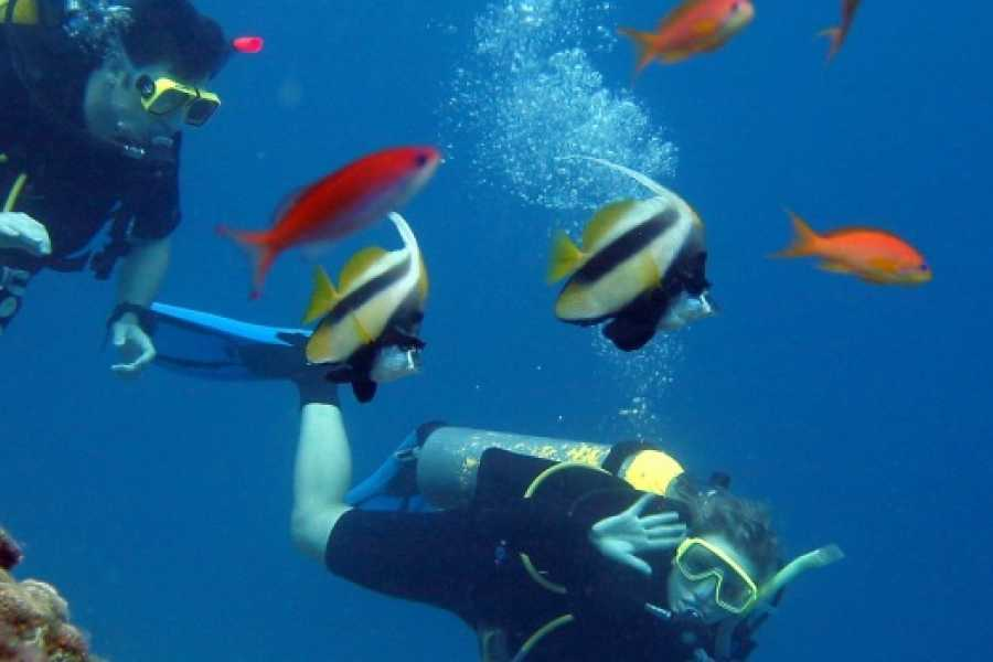 Marsa alam tours Shaab Samadai Snorkeling Trip From El Quseir
