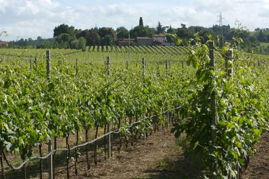 Enoteca Emilia Romagna Attraverso 3 generazioni - visita e degustazione presso Merlotta vini
