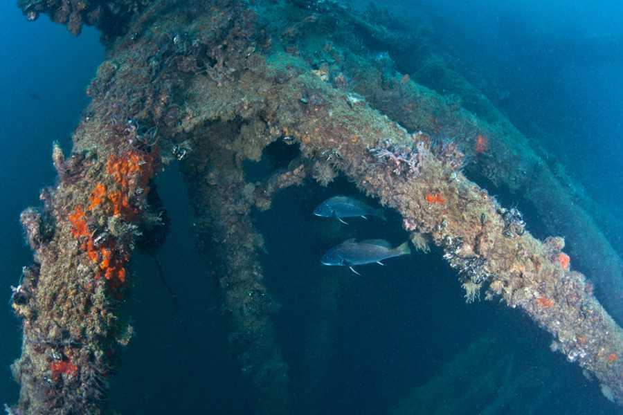 VisitRimini Plongée vers l'épave du Paguro