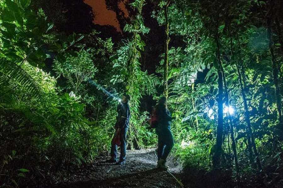 Tour Guanacaste Buena Vista Night Walk & Hanging Bridges